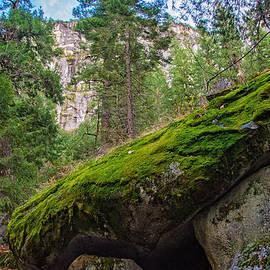 Lynn Bauer - Mossy Rocks Along Vernal Falls Trail