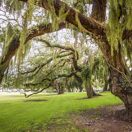 Debra and Dave Vanderlaan - Mossy Trees at Jekyll Island