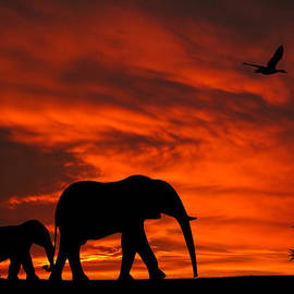 David Dehner - Mother and Baby Elephants Sunset Silhouette Series