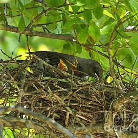 Al Powell Photography USA - Mother Mockingbird