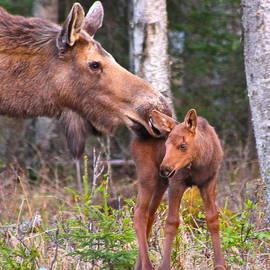 Rick  Monyahan - Mothers Love