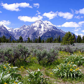 Brian Harig - Mount Moran Wildflowers