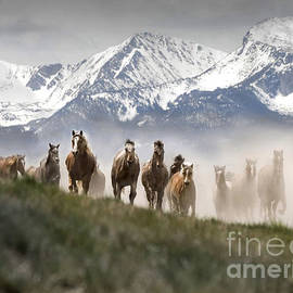 Wildlife Fine Art - Mountain Dust Storm