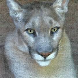 Tom Janca - Mountain Lion At Sonoran Natural Museum