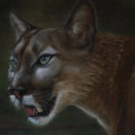 Julie Olsen - Mountain Lion
