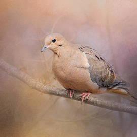 Jai Johnson - Mourning Dove On A Winter Evening