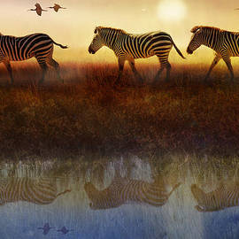 R christopher Vest - Moving North Zebras And Ibis