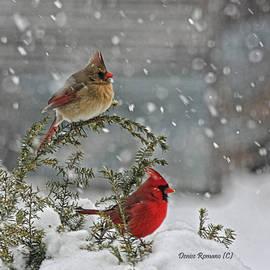 Denise Romano - Mr. and Mrs. Cardinal