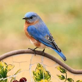 Judy Genovese - Mr. Bluebird