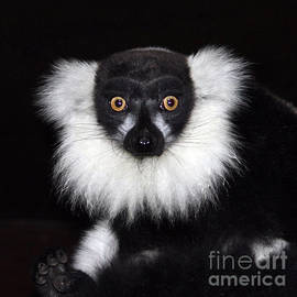Terri  Waters - Mr Lemur