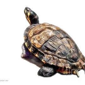 Joan  Minchak - Mr. Turtle