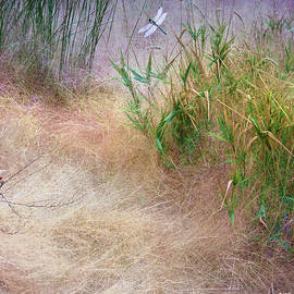 R christopher Vest - Muhly Grass Textures With Dragon Flies