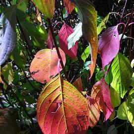 Dale Jackson - Multihued Fall Foliage 2