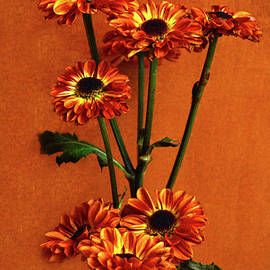 Sandi OReilly - Mums The Happy Fall Flower