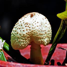 Davids Digits - Mushroom head