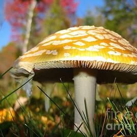 J L Kempster - Mushroom