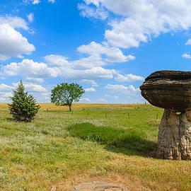 Paul Moore - Mushroom Rock