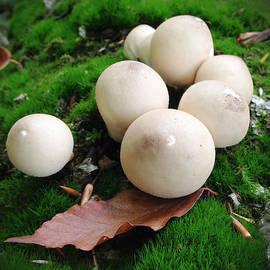 Jeff Klingler - mushroom13