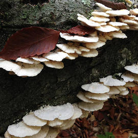 Jeff Klingler - mushroom14