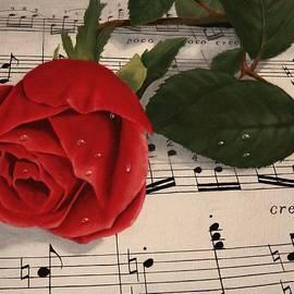 Sid Ball - Musical Rose