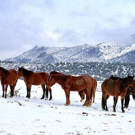 Maria Jansson - Mustangs in a winter landscape