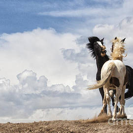 Sharon Ely - Mustangs in the Clouds