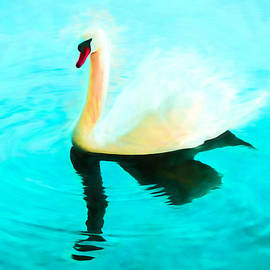 Priya Ghose - Mute Swan Art - Swimming In Turquoise