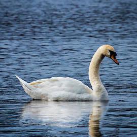 Nick Jaramillo - Mute Swan