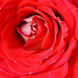 Teresa Blanton - My Delicate Rose