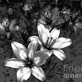 Beverly Guilliams - Digital Art Lilies