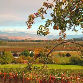 Brooks Garten Hauschild - My Favorite Valley View