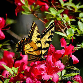 Nava  Thompson - My Happy Garden