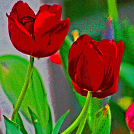 Joseph Coulombe - Red Tulips