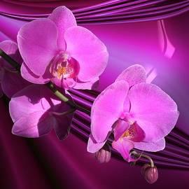 Gabriella Weninger - David - My Winter Orchid