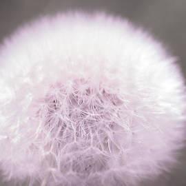 The Art Of Marilyn Ridoutt-Greene - My Wish