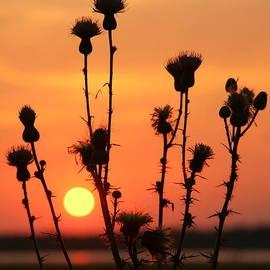 Myrna Bradshaw - Myakka Sunset