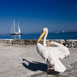 David Smith - Mykonos Pelican