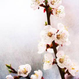 Alexander Senin - Mysteries Of Spring 1
