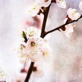 Alexander Senin - Mysteries Of Spring 3