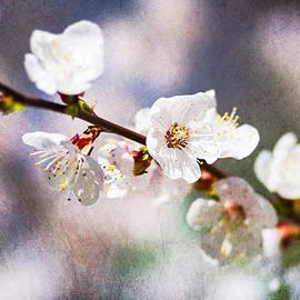 Alexander Senin - Mysteries Of Spring 6