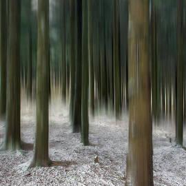 Patrick Jacquet - Mysterious frozen forest 2