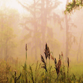 Karry Degruise - Mysterious Swamp