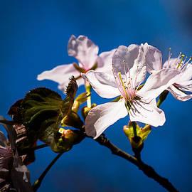 Alexander Senin - Mystery Of Blooming