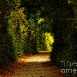 Inspired Nature Photography By Shelley Myke - Mystical Forest Point Pelee