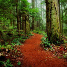 Randy Hall - Mystical Trail