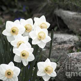 Elaine Mikkelstrup - Narcissus