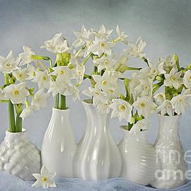 Jacky Parker - Narcissus