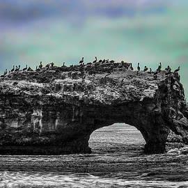 Wes Jimerson - Natural Bridges State Beach