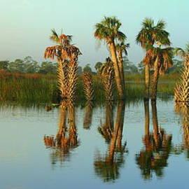 Myrna Bradshaw - Natural Florida Reflecting