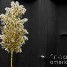 James Aiken - Natural Seeding